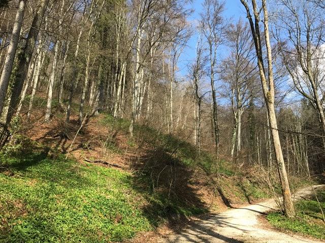 Wald mit Bärlauch.