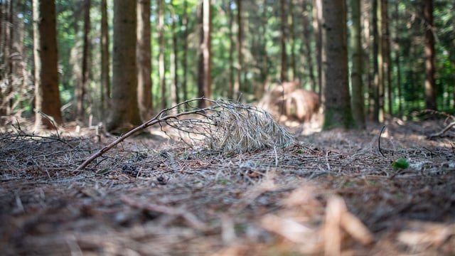 Ein trockener Waldboden.