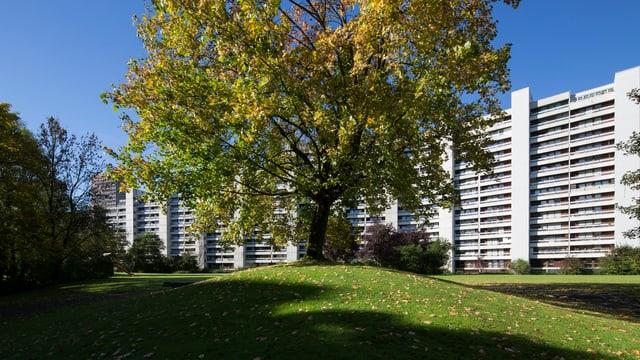 Telliüberbauung. Grosse Wohnblöcke. Im Vordergrund steht ein Baum.