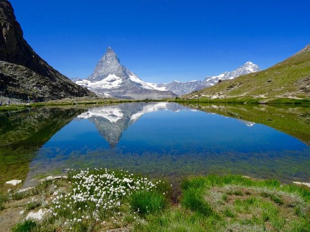 Klarer Bergse mit Blumenwiesen gesäumt. Darin spiegelt sich das Matterhorn am Horizont. Die Sonne scheint vom stahlblauen Himmel.