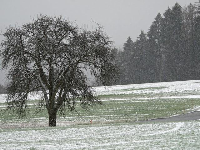 Schneefall in Oberhueb, Neftenbach.