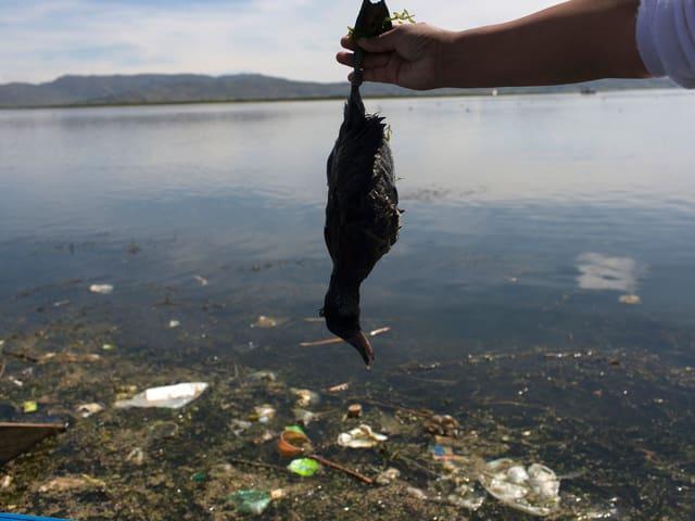 Aktivist hält eine tote Ente, darunter verschmutztes Wasser