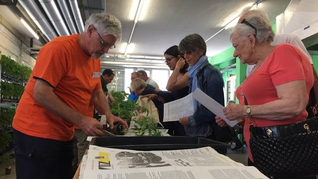 Ein Mann in einem orangen Leibchen verpackt eine Tomatenpflanze in Zeitungspapier.