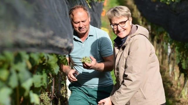 Christian Herzog und Monika Herzog sind auf ihrem Weingut in Thal/SG bei der Wimmet - der Weinernte.