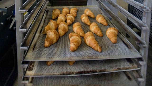 Firsch aufgebackene Gipfeli auf einem Backblech in einer Grossbäckerei.