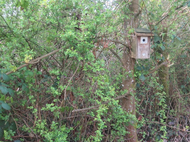 Ein Nistkasten an einem Baum, ca. 3 Meter über Boden.