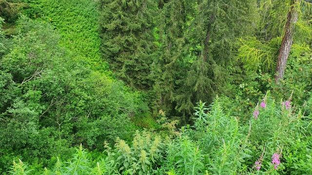 Bostga, flurs e bostgaglia cuvran la veglia deponia a Tschlin