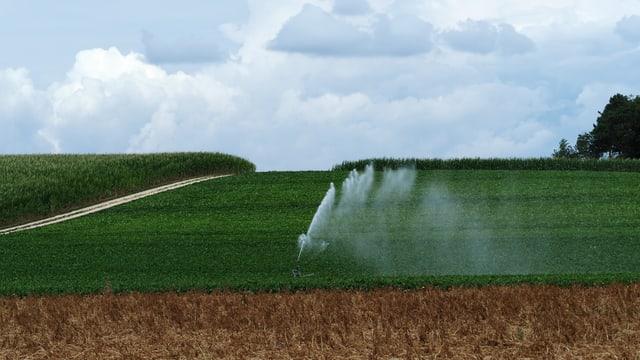 Bewässerungsanlage auf einem Feld bei Winterthur.