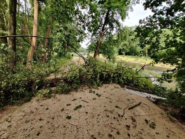 Entlang der Wiese in Basel sind etliche Bäume umgestürzt.