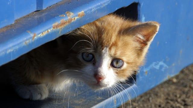 Kleine Katze schaut zu einem Loch raus