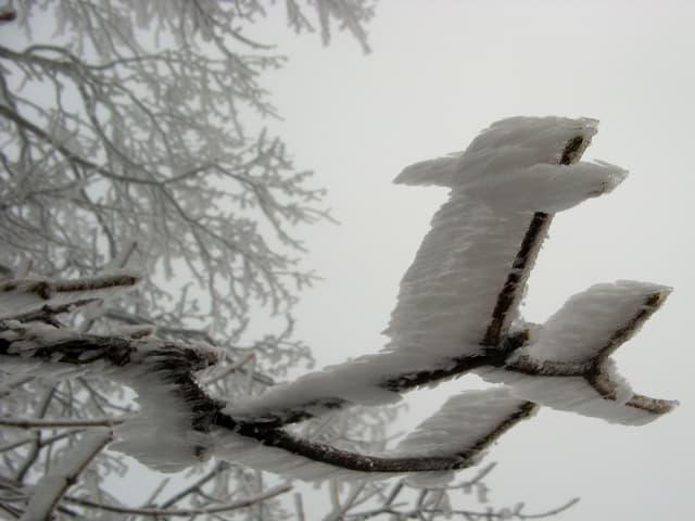 Graues Nebelbild. Im Vordergrund ein Ast mit Eisansatz, alles Eis zeigt in eine Richtung.