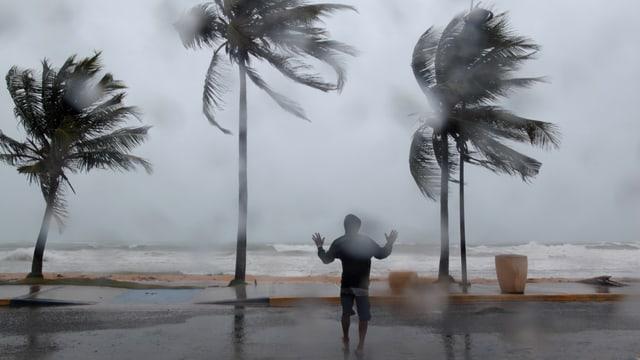 «Irma» peitscht die Wellen hoch, Palmen wogen im Sturm (Luqillo, 6.9.2017)