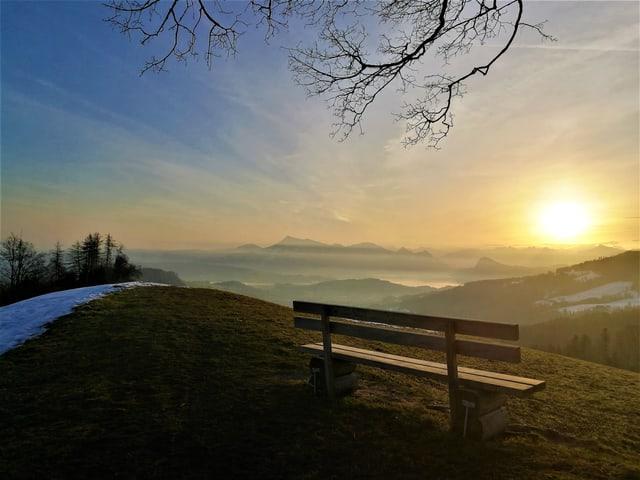 Sie Sonne steht tief, sie leuchtet golden auf eine Bank und einem Baum, im Vordergrund.