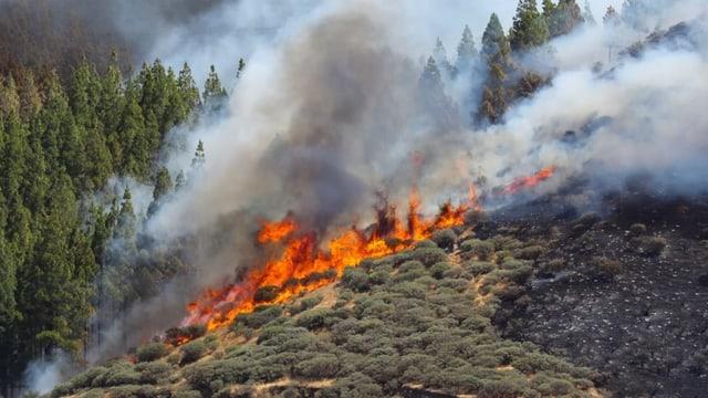 Waldbrand an einem Hang