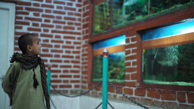 Bub steht vor einer Wand mit Terrarien.