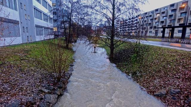 Ein Bach ist kräftig angeschwollen, so dass die Bäume jetzt teilweise im Wasser stehen.