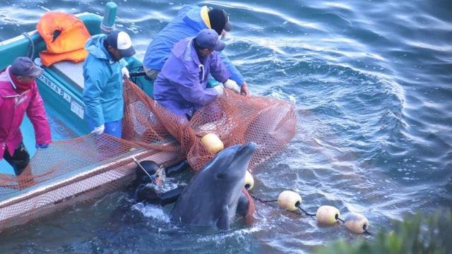Japanische Fischer schlachten Delfine ab.