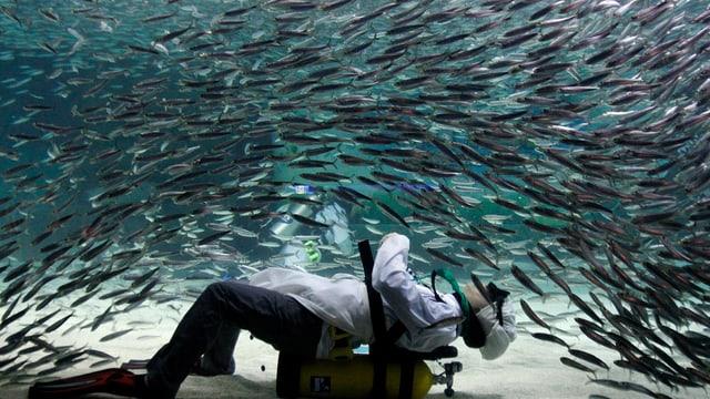 Die koordinierte Fortbewegung von Fisch-Schwärmen ist nicht nur für Taucher faszinierend.