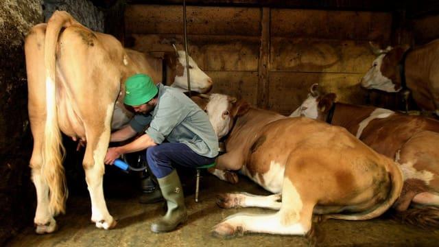 Ein Bauer im Stall beim Melken