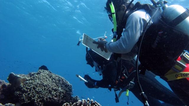 Dr. Joleah Lamb und Dr. Syafyudin Yusuf untersuchen in Indonesien Korallen auf Anzeichen von Krankheiten.
