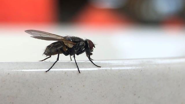 Fliege vor verschwommenem Hintergrund