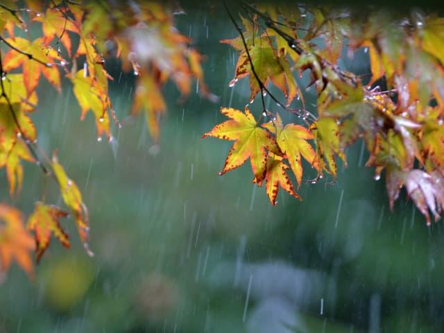 Feine Regentropfen vor herbstlichen Blättern.