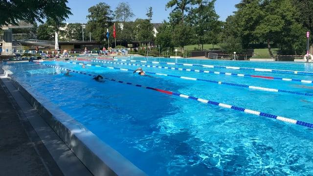 Aarefisch-Schwimmer