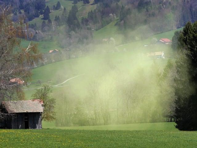 Gelbliche Wolke über einem Rasenfeld.