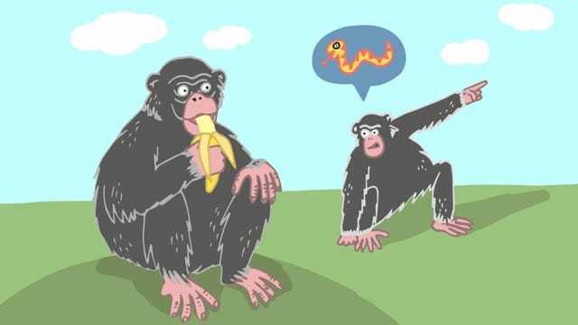 Ein Affe isst eine Banane. Ein anderer zeigt nach rechts und weist auf eine Schlange hin.