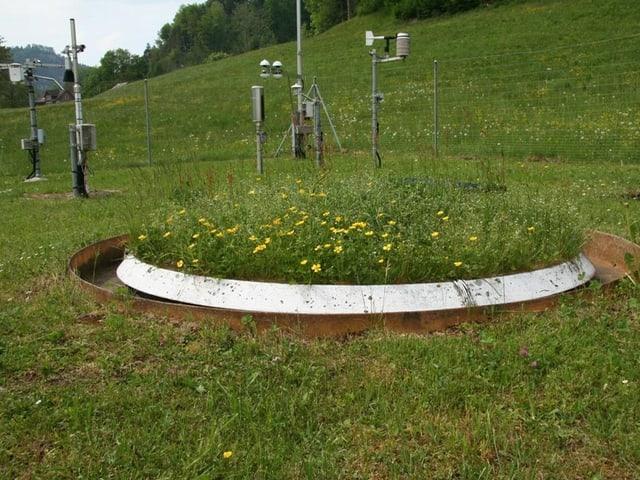 Ein Lysimeter am Messfeld der ETH (Eidgenösische technischen Hochschule). Ein zylindrischer Behälter mit der Bodenstruktur gefühlt und darauf der natürliche Bewuchs der Umgebung. (Gras und Blumen).  Er ist Im Boden versenkt.