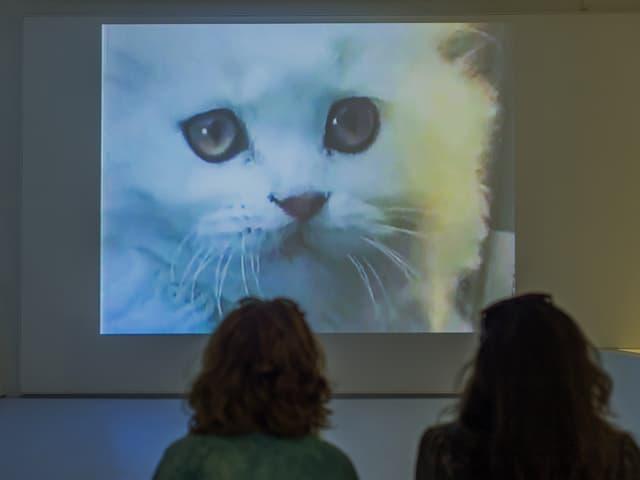 Auf einer Leinwand erscheint eine weisse Katze. Davor sitzen zwei Personen und schauen zu.