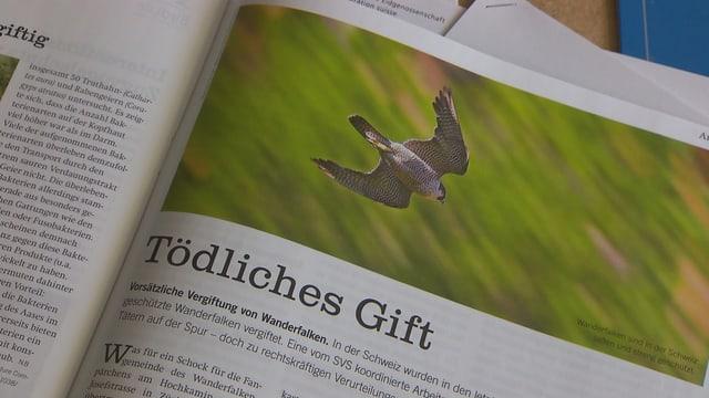 Video «Mit Tauben gegen Falken, die Schweiz bewegt, Morgarten-Fundstücke» abspielen