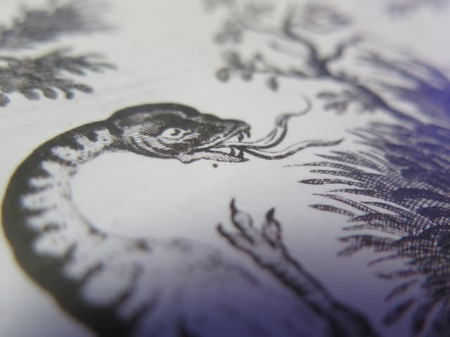 Der Drache von der Alp Kamor, gezeichnet um 1723.