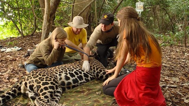 Video «Die Leuzingers im Jaguarland» abspielen