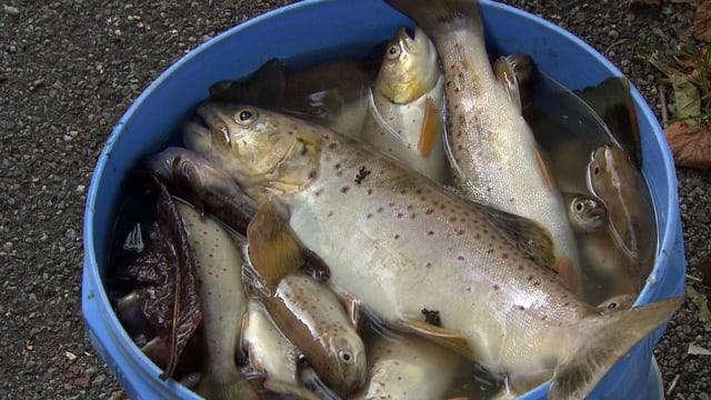 Video «Fische: Fische ohne Wasser (2/6)» abspielen