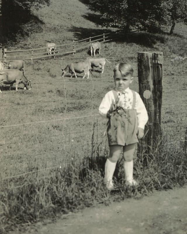 Schwarz-Weiss-Fotografie mit einem kleinen Bub, der am Zaun vor einer Wiese mit Kühen steht.