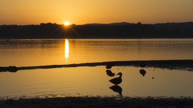 Sonnenaufgang über dem Greifensee, alles in Gold getaucht.