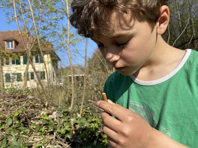 Junge mit Pflanzenstängel
