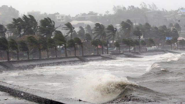 Palmas e la mar cun undas autas, i plova