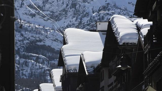 chasas en in vitget alpin e davostiers la paraid d'ina muntogna.