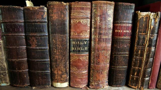 Neun alte Bücher stehen neben einander, es sind alles Bibeln.