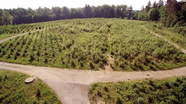Blick auf die bepflanzte Sondermülldeponie