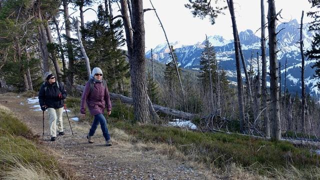 Zwei Wanderer in einem winterlichen Wald ohne Schnee.