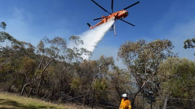 Helikopter lässt Wasser über Brand ab
