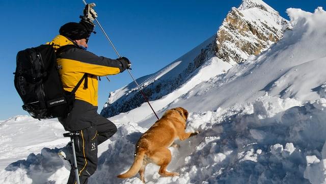 Eine Hundeführer mit seinem Tier bei der Suche nach Verschütteten.