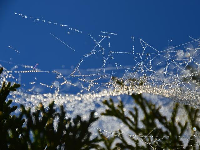 Tautröpfchen auf einem Spinnennetz glitzern in der Morgensonne.