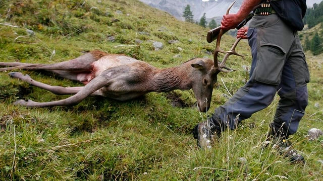 Jäger mit totem Hirsch