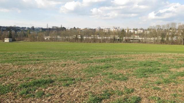 Leere Graswiese, im Hintergrund eine städtische Siedlung.