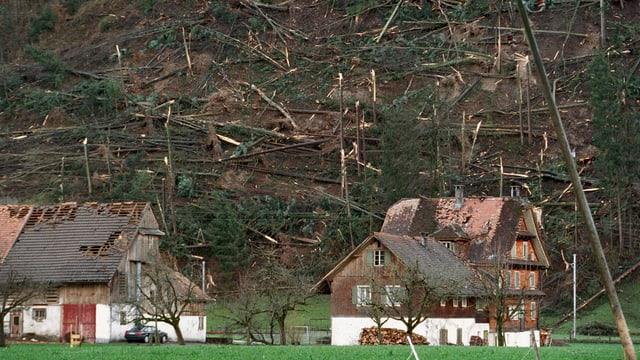 Bild der Zerstörung: Vor genau 15 Jahren wütete der Orkan Lothar.