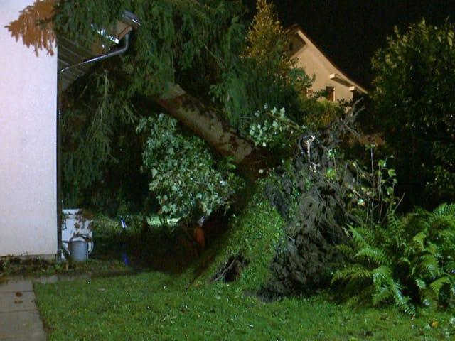 Ein entwurzelter Baum ist auf ein Hausdach gefallen.